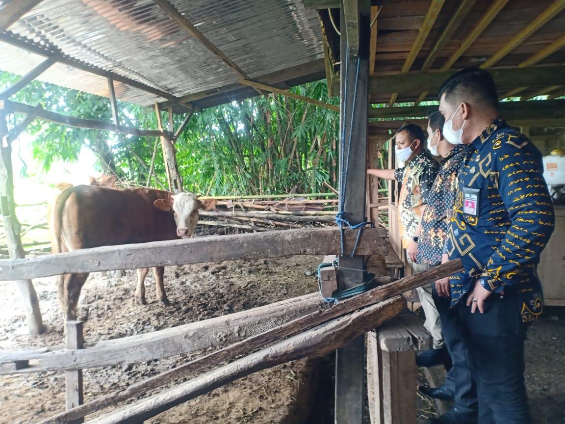 Bupati Takalar Syamsari meninjau lokasi pengembangbiakan sapi di desa Massamaturu, kecamatan Polut, Kamis 18 Februari 2021. (Int)