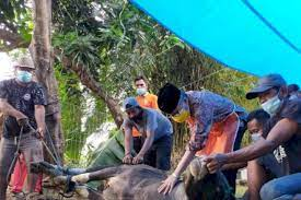 Walikota Parepare HM Taufan Pawe memotong sendiri hewan korbannya setiap hari raya Idul Adha tiba. (Ist)